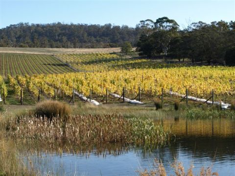 Puddleduck Vineyard